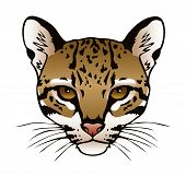 picture of ocelot  - A vector ink illustration of an ocelot - JPG
