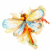 pic of flying-insect  - Vector greeting background with beautiful watercolor flying orange dragonfly - JPG