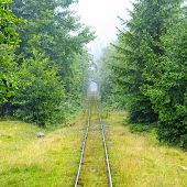 Narrow-gauge Railway In The Forest