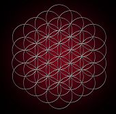 stock photo of pentagram  - Flower of life - JPG