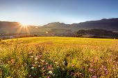 Wild Flower Meadow In Mountain At Sunrise
