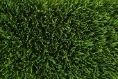 stock photo of stomp  - Aerial view of lush green grass  - JPG