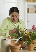 picture of 50s 60s  - Senior Hispanic woman gardening indoors - JPG