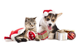 pic of puppy christmas  - dog and cat and kitens wearing a santa hat - JPG