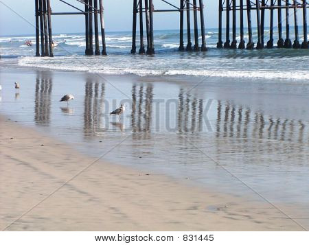 Picture or Photo of Seagulls enjoying a meal on a California beach