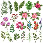 foto of jungle flowers  - Set of traditional and tropical flowers and leaves - JPG