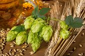 stock photo of cone  - hop cones and raw material for beer production - JPG