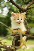 foto of mew  - Cute small kitten climbing tree and meowing funny - JPG