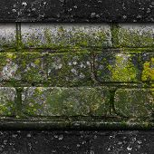 image of fungus  - moss old green wall stone pattern mold gray texture background rock brick fungus - JPG