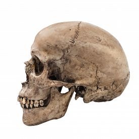 image of skull  - Human skull on isolated white background side view - JPG