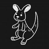 picture of kangaroo  - Kangaroo Doodle - JPG