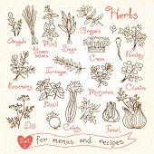 image of recipe card  - Set drawings of herbs for design menus - JPG