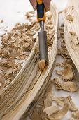 foto of hollow log  - Didgeridoo Making - JPG
