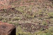picture of pipe organ  - Organ Pipe Cactus National Monument is a U - JPG