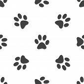 foto of webbed feet white  - Image of animal paw print - JPG