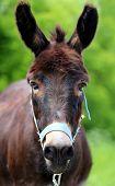 foto of wild donkey  - Beautiful portrait of a donkey photographed close up - JPG