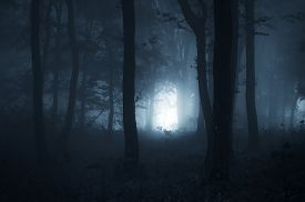 image of scary haunted  - Path trough dark mysterious haunted forest at night on Halloween night - JPG
