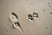 pic of paw-print  - Man and Dog Prints on the Beach - JPG