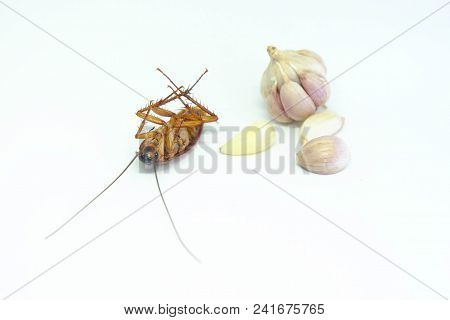 A Garlic Can Chase Cockroachesclose