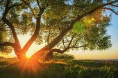 Majestic Vivid Sunset Through Trunk Of Tree At Beautiful Nature. Perfect Sun Rays On Horizon Lights poster