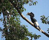 image of full cheeks  - a male bird named  - JPG