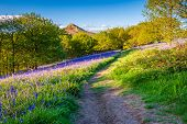 Footpath Through Newton Wood, Below Roseberry Topping, A Distinctive Hill In North Yorkshire, Popula poster