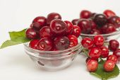 Cherries. Cherry. Cherries In Color Bowl And Kitchen Napkin. Red Cherry. Fresh Cherries. Cherry On W poster