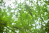 Natural Spring Blurred Green Leaves Background. Create Light Soft Blurred Colors In Bright Sunshine. poster