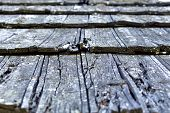 Wooden Pattern With Cracks On It And Focus On Foreground poster