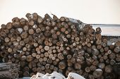 Cross section of the timber, firewood stack for the background. A lot of cutted logs. Stack of sawn  poster
