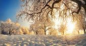 Panoramic Winter Rural Landscape With The Sun Shining Gold Behind A Beautiful Snow-covered Tree On A poster