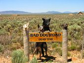 stock photo of blue heeler  - Blue Heeler and a German Sheppard mix hanging out on a funny sign - JPG