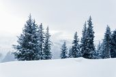 White Winter Landscape With Snow, Fir Trees, Foggy Mountains And Overcast Sky With Low Clouds In Sch poster