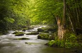foto of backwoods  - Peaceful Great Smoky Mountains National Park foggy Tremont River relaxing nature landscape scenics near Gatlinburg TN - JPG