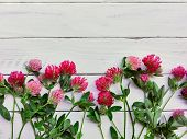Red Clover Flowers (trifolium Pratense) Close Up Flat Lay. Spring Red Or Pink Clover Flowers On Whit poster
