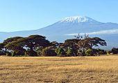 foto of kilimanjaro  - Amboseli National Park and Mount Kilimanjaro in Kenya - JPG