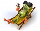 image of amazonian frog  - Frog - JPG