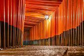 picture of inari  - Fushimi Inari Taisha Shrine torii gates in Kyoto - JPG