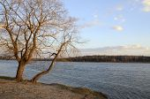 pic of bent over  - Landscape with a tree bent over the lake in the early spring - JPG
