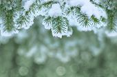 stock photo of cold-weather  - Winter background with Christmas tree branch frozen - JPG
