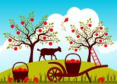 stock photo of hand-barrow  - vector hand barrow with baskets of apples in apple orchard - JPG