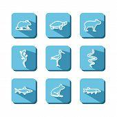 stock photo of amphibious  - Set with icons  - JPG