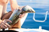 picture of animal cruelty  - Fishing  - JPG