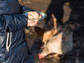 image of poultry  - Pretty girl holding fresh organic eggs - JPG