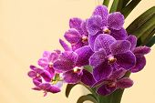 pic of orquidea  - Beautyful Orchid in the city on morning - JPG