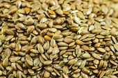 foto of flax seed oil  - Close up of flax seeds - JPG