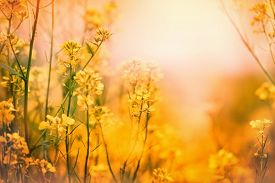stock photo of yellow  - Soft focus on yellow meadow flowers and grass