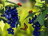 pic of ladybug  - Ladybug on a leaf of grapes - JPG