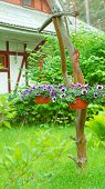 stock photo of petunia  - Baskets with a petunia flowers hanging on the tree