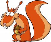 image of acorn  - Squirrel with acorns on a white background vector illustration - JPG